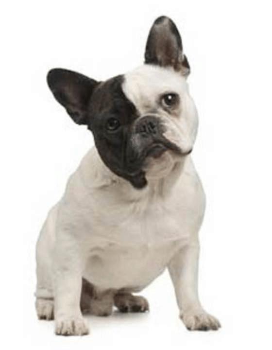 curious-faq-pupv2